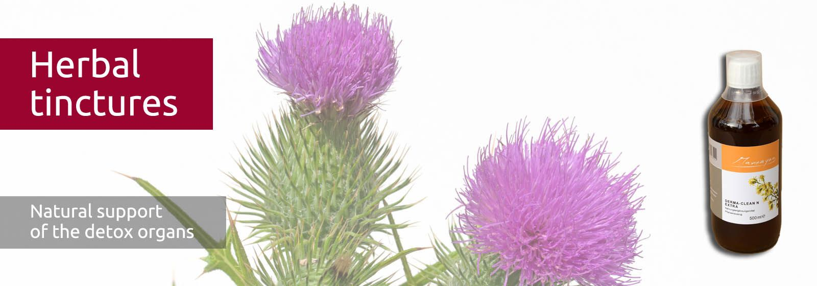 The artichoke with purple blossom is a classic remedy for the liver