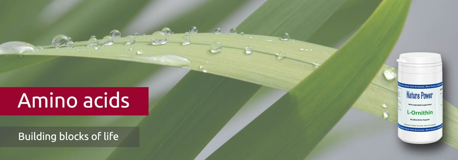 water drops on a palm leaf shine in the sun