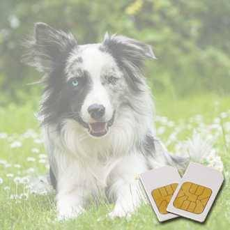 Chipcard PETS for zapper Biowave according to Hulda Clark